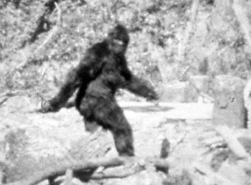 Idag kan man säga att Roger Patterssons Big Foot-film är avslöjad som fake. Men när det begav sig på 60-talat var all inte riktigt lika säkra.